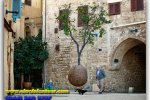 Orange Tree, Jaffa, Israel. Tours of Kiev from the Ukrainian Tour (044) 360 5737