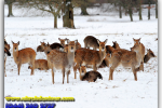 Reserve Far Eastern deer. Travel from Kiev to Ukrainian Tour (044) 360 5737